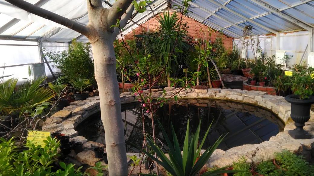 Ботанический сад в казани картинки