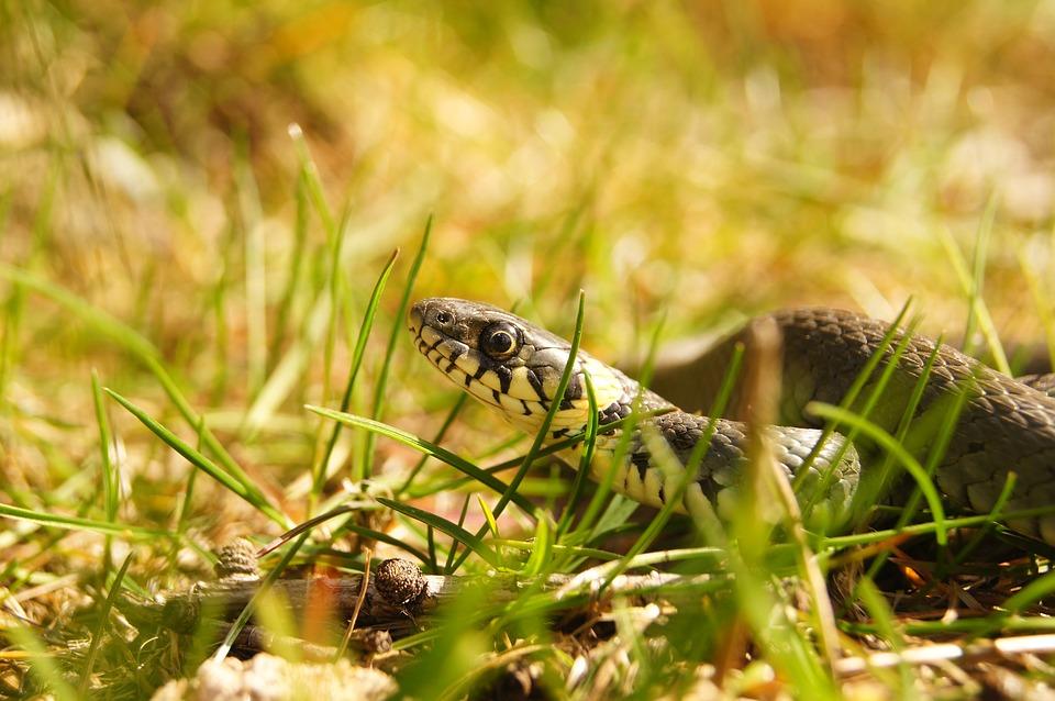 змеи в татарстане в картинках настоящее время