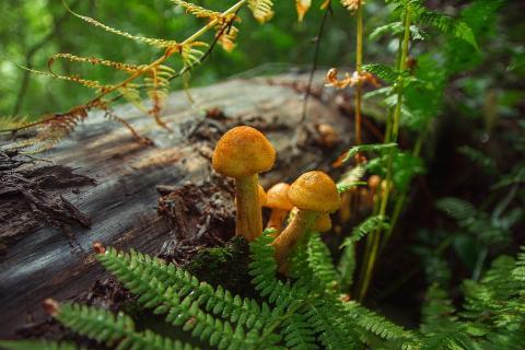 Эксперт КФУ: «При низких, но положительных температурах одни виды грибов уступают другим»